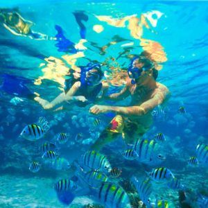 catalina-island-snorkelling-saona-dreams-dominican-republic-excursion