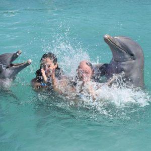 actividad en la isla de los delfines