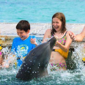 experiencia en la isla de los delfines-2