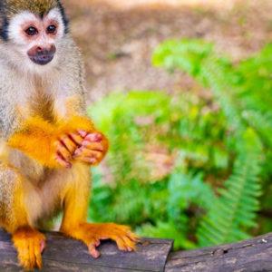 monkeyland_7
