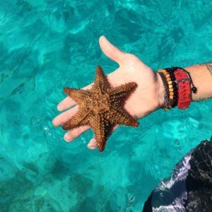 mořská hvězda-1024×768