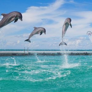the-show-with-dolphins