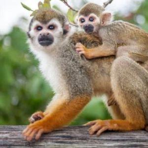 Monkeyland-Juan-Dolio-Full-Day-image-1
